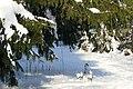 Фото путешествия по Беларуси 728.jpg