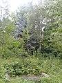 Часть лесопарка НИИЛГиС.jpg