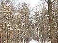 Январь в Нижегородской области.jpg