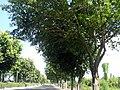 广东省江门市S271公路景色 - panoramio (59).jpg