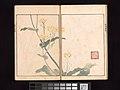 池田孤邨画 『抱一上人真蹟鏡』-Ōson (Hōitsu) Picture Album (Ōson gafu) MET DP263502.jpg