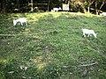 芝山嚴古蹟(小羊在小山坡地吃吵草)雕塑羊 - panoramio.jpg