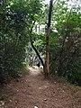 通往宰牛溪的岔路口 - Footpath to Zainiu Brook - 2015.02 - panoramio.jpg