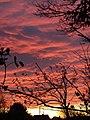 -2014-11-14 Sunrise, Trimingham, Norfolk (2).JPG