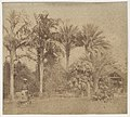 -Gardens, Government House, Allahabad- MET DP146125.jpg