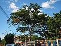 02846jfChurches Zapote Road Camarin North Caloocan Cityfvf 01.JPG