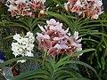 05441jfMidyear Philippine Orchid Show Quezon Memorial Circlefvf 17.JPG