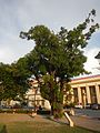 08635jfProvincial Capitol Boulevard San Fernando City Pampangafvf 07.jpg