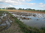 09383jfRoads Paddy fields Domesticated ducks Bahay Pare Center Candaba Pampangafvf 24.JPG