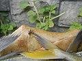 1205Fishes textures common houseflies 18.jpg