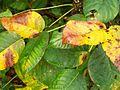 1461953 The-leaves-of-autumn--Charlotte 620.jpg