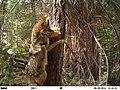 180 02 0041 Coyote (35546873863).jpg