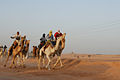 20070227 Camel Race in Ouargla.jpg