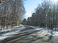 2007 12 06 - PWRC - American Holly Dr 6.JPG