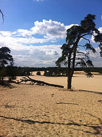 2012-08-25 Loonse en Drunense Duinen – Tree.jpg