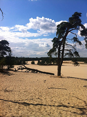 Image illustrative de l'article Parc national De Loonse en Drunense Duinen