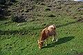 2012-10-27 11-43-07 Pentax JH (49283671751).jpg