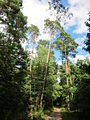 20130731Speyrer Wald20.jpg