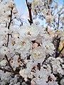 2016.04.08 19.19.29 DSC03235 - Flickr - andrey zharkikh.jpg