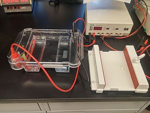 Immunoproteomics - Common 2D-gel electrophoresis apparatus
