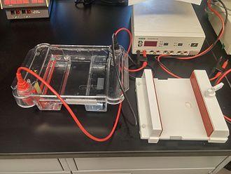 Immunoproteomics - Common 2D-gel electrophoresis apparatus