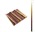 3D AFM Image of a Moth Wing.png