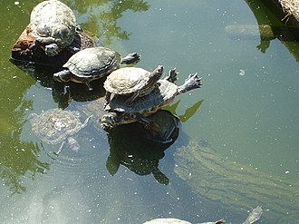 Duisburg Zoo - Turtles in the Duisburg Zoo