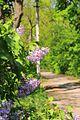 71-251-5001 Velyka Burimka park DSC 6206.jpg