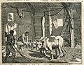 AMH-7009-KB Threshing grain with the help of cattle, Ceylon.jpg