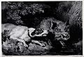 A dog threatens a wild boar. Lithograph after F. Tayler, ca. Wellcome V0023259.jpg
