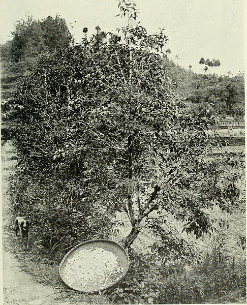 File:A naturalist in Western China - with vasculum, camera, and gun, being some account of eleven year's travel, exploration, and observation in the more remote parts of the flowery kingdom; (1913) (14595970200).jpg