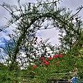 A small Garden 093237.jpg