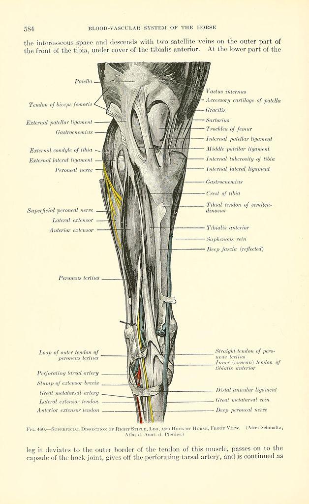 Berühmt Organ Systemabbildern Fotos - Anatomie Ideen - finotti.info