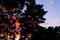 Abenddämmerung - panoramio (1).jpg