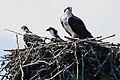 Acadia 2012 08 23 0198 (7958555186).jpg