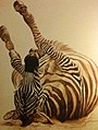 Adam Marian Pete - Zebra Feliz.jpg