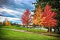 Again Gorgeous Fall - Lake Meridian Kent WA - panoramio.jpg
