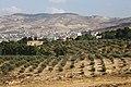 Ain Albasha District, Jordan - panoramio (10).jpg