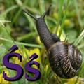 Alfabet zwierząt - literka Ś.png