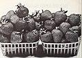 Allen's 82nd book of berries (1967) (17924275146).jpg
