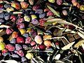 Alpes-de-Haute Provence Récolte d'olives.jpg