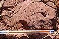 Alto Araguaia - State of Mato Grosso, Brazil - panoramio (266).jpg
