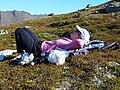 An Alaskan redhead relaxing after a steep climb (5511702385).jpg