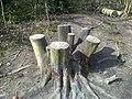 An Interesting Bird Table - geograph.org.uk - 1222237.jpg