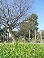 Ancient Olympia Ruins (5987159384).jpg