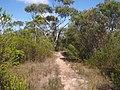 Anice Falls Track - panoramio (8).jpg