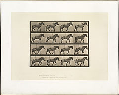 Animal locomotion. Plate 569 (Boston Public Library).jpg