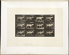 Animal locomotion. Plate 696 (Boston Public Library).jpg