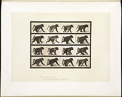 Animal locomotion. Plate 747 (Boston Public Library).jpg