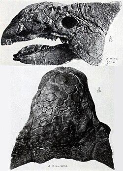meaning of ankylosaurus